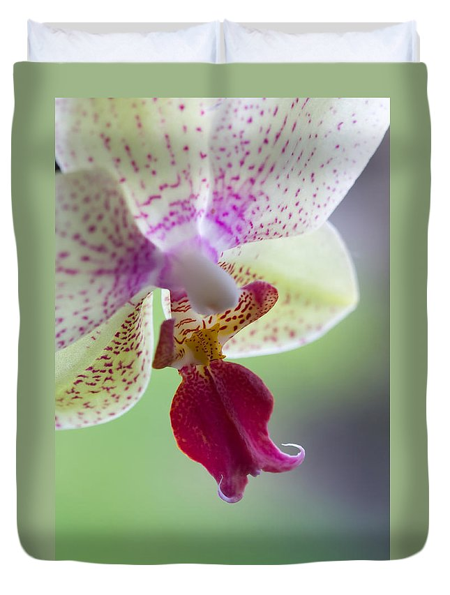 Orchid Duvet Cover featuring the photograph Orchid by Chris Smith