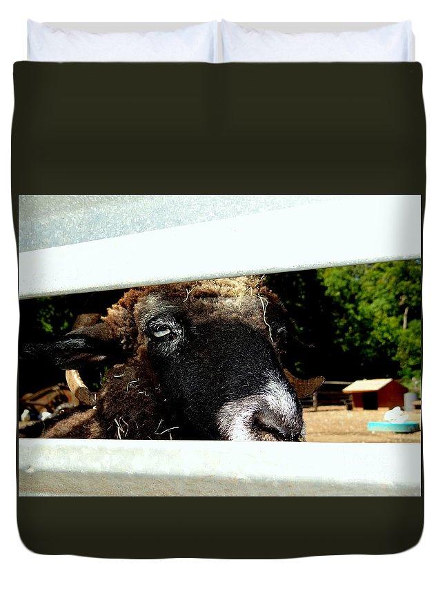 Fence Duvet Cover featuring the photograph Peek A Boo by Ed Weidman