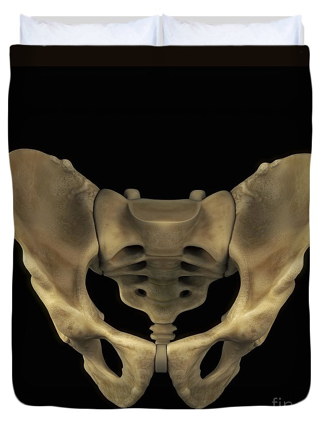 3d Visualisation Duvet Cover featuring the photograph Pelvic Bones Male by Science Picture Co
