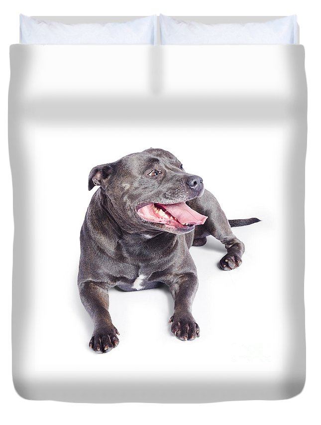 Adorable Duvet Cover featuring the photograph Pet Dog Isolated On White Background by Jorgo Photography - Wall Art Gallery