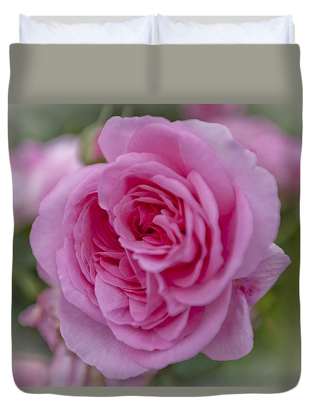 Pink Rose Duvet Cover featuring the photograph Pink Rose by Maj Seda