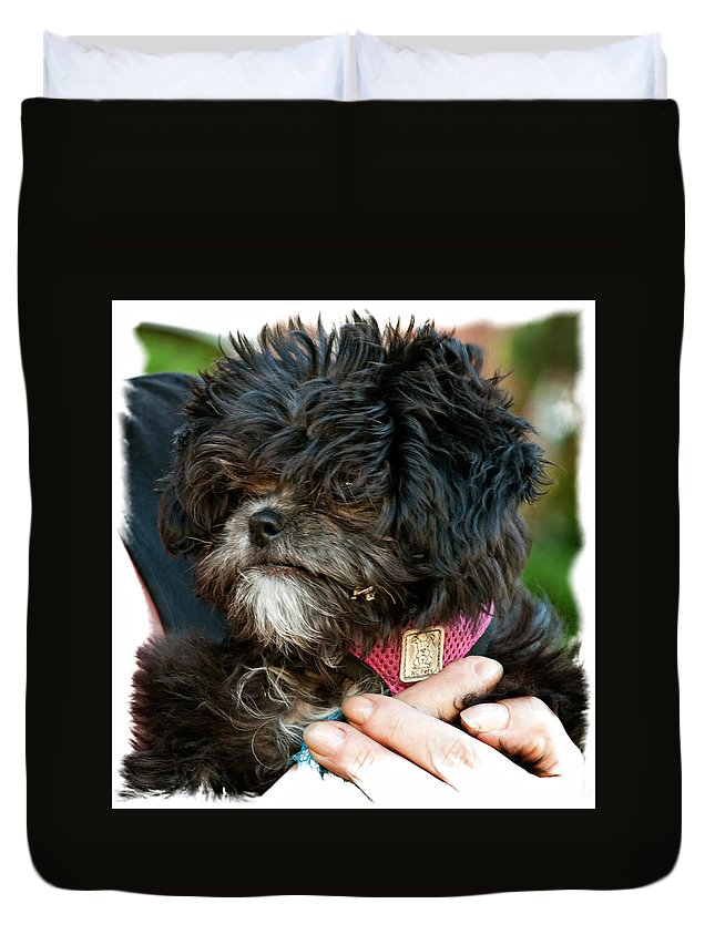 Ragamuffin Duvet Cover featuring the photograph Ragamuffin by Steve Harrington