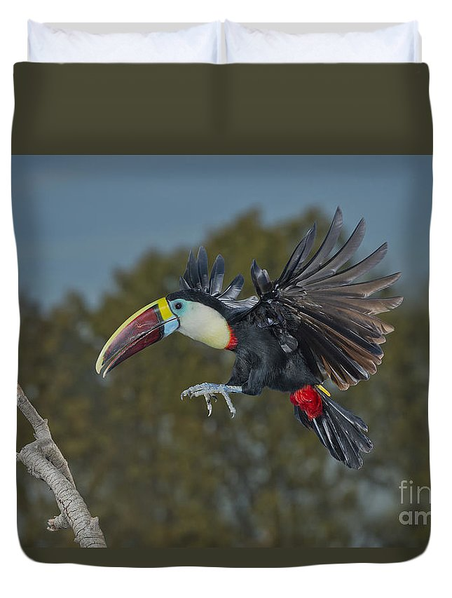 Red-billed Toucan Duvet Cover featuring the photograph Red-billed Toucan by Anthony Mercieca
