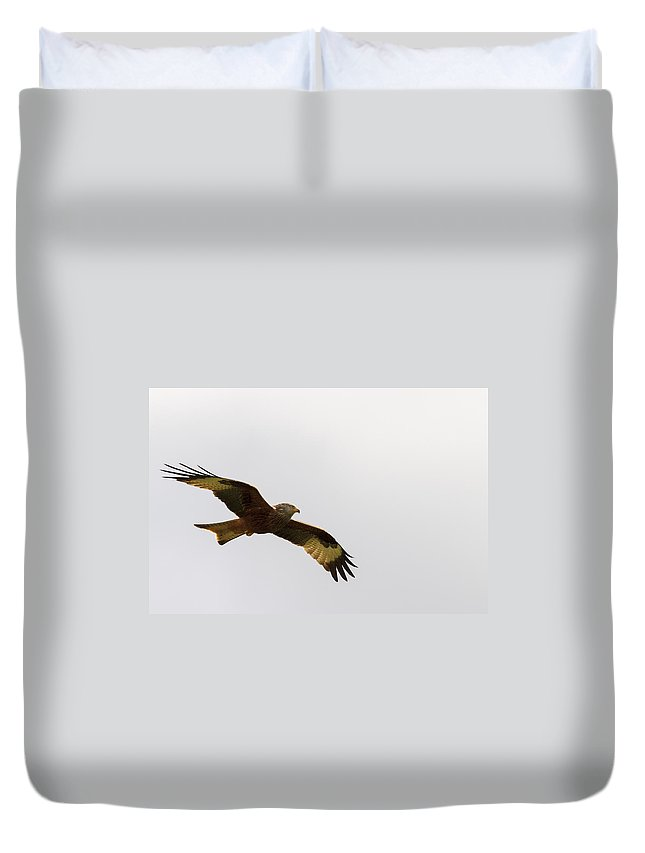 Red Kite Duvet Cover featuring the photograph Red Kite  by Chris Smith