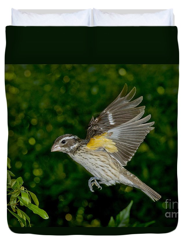 Rose-breasted Grosbeak Duvet Cover featuring the photograph Rose-breasted Grosbeak by Anthony Mercieca