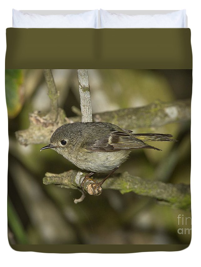 Ruby-crowned Kinglet Duvet Cover featuring the photograph Ruby-crowned Kinglet by Anthony Mercieca