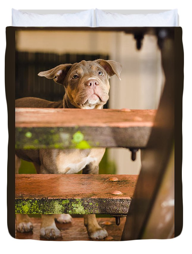 Dog Duvet Cover featuring the photograph Sad Lost Puppy Dog Looking Up Steps Of A House by Jorgo Photography - Wall Art Gallery