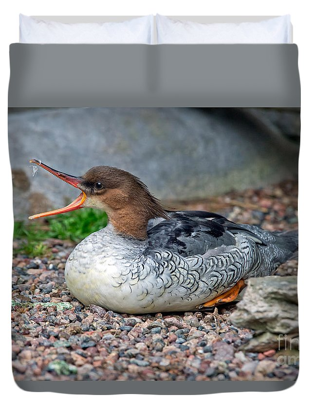 Anatidae Duvet Cover featuring the photograph Scaly-sided Merganser Hen by Anthony Mercieca