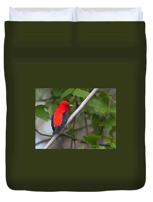 Bird Duvet Cover featuring the photograph Scarlet Tanager by Charles Owens