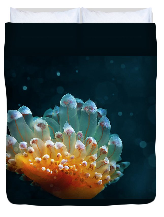 Underwater Duvet Cover featuring the photograph Sea Life by Ultramarinfoto