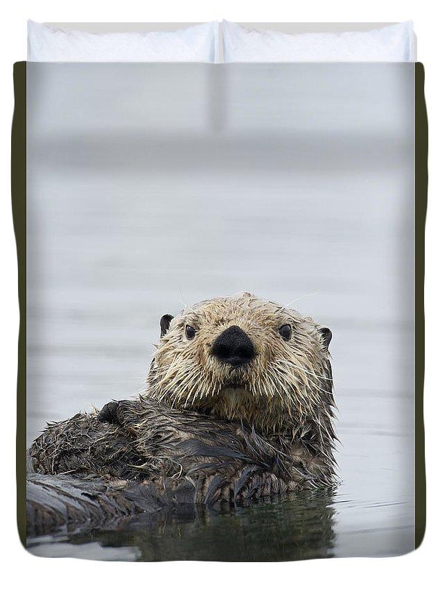 Michael Quinton Duvet Cover featuring the photograph Sea Otter Alaska by Michael Quinton