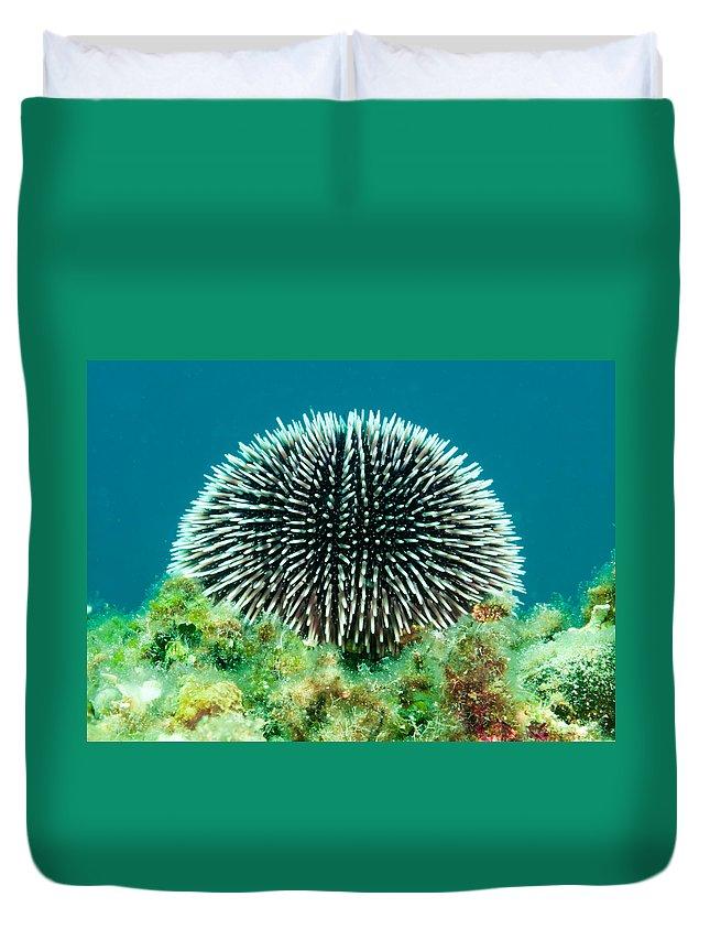 Echinoidea Duvet Cover featuring the photograph Sea Urchin by Roy Pedersen