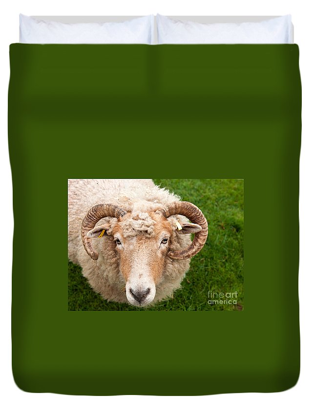 Sheep Duvet Cover featuring the photograph Sheep With Horns by Luis Alvarenga