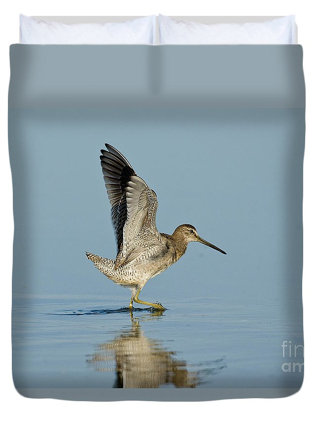 Short-billed Dowitcher Duvet Cover featuring the photograph Short-billed Dowitcher by Anthony Mercieca