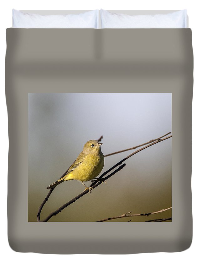 Doug Lloyd Duvet Cover featuring the photograph Sitting Pretty by Doug Lloyd