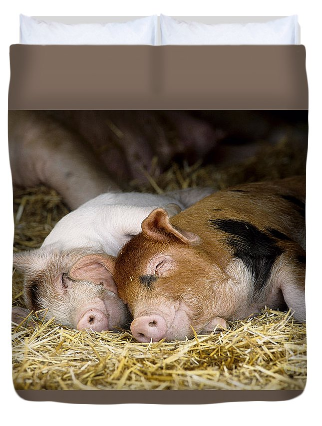 Pig Duvet Cover featuring the photograph Sleeping Hogs by Inga Spence