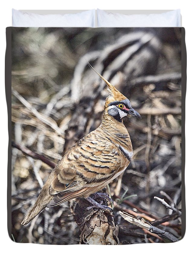 Spinifex Pigeon Duvet Cover featuring the photograph Spinifex Pigeon by Douglas Barnard
