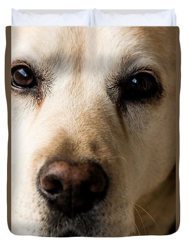 Labrador Duvet Cover featuring the photograph Sweetness by Ernesto Santos