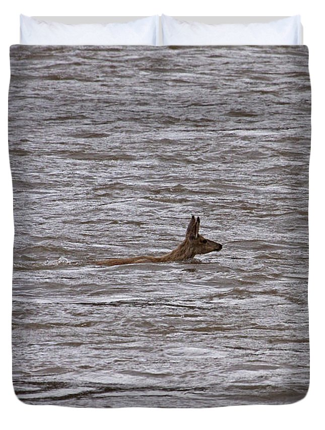 Odocoileus Hemionus Duvet Cover featuring the photograph Swimming Mule Deer  #7058 by J L Woody Wooden