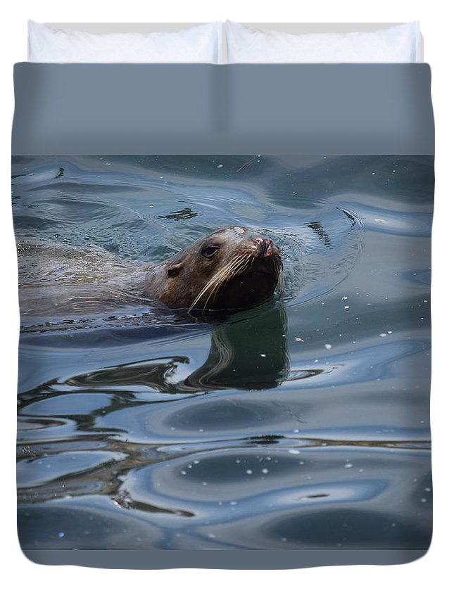 Sea Lions Duvet Cover featuring the photograph Swimming Sea Lion by Steve Scheunemann