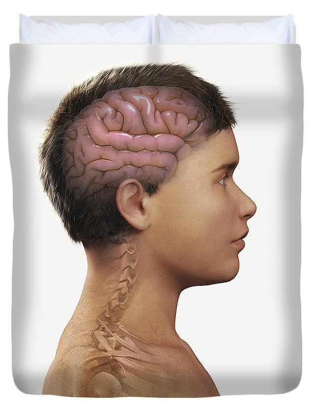 Pediatric Anatomy Duvet Cover featuring the photograph The Brain Child by Science Picture Co