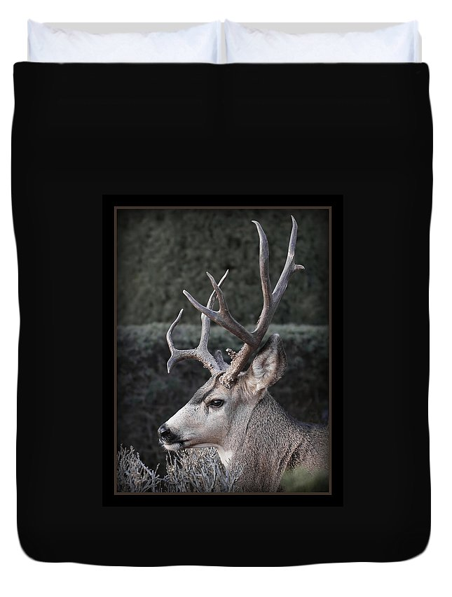 The Buck Duvet Cover featuring the photograph The Buck by Ernie Echols