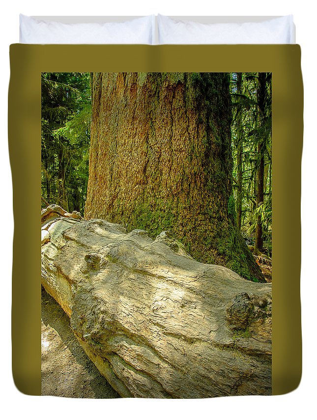 Old Growth Forest Duvet Cover featuring the photograph The Fallen Collection 6 by Roxy Hurtubise