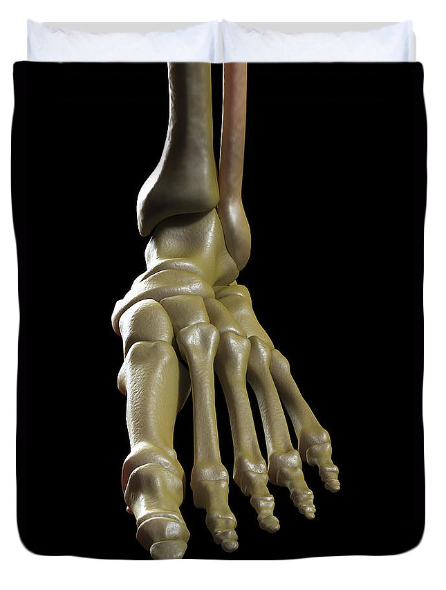 Biomedical Illustration Duvet Cover featuring the photograph The Foot Bones by Science Picture Co