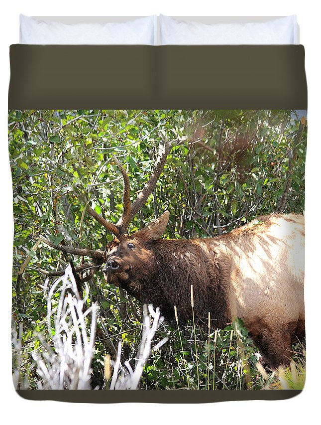 Elk Duvet Cover featuring the photograph The Rut by Shane Bechler