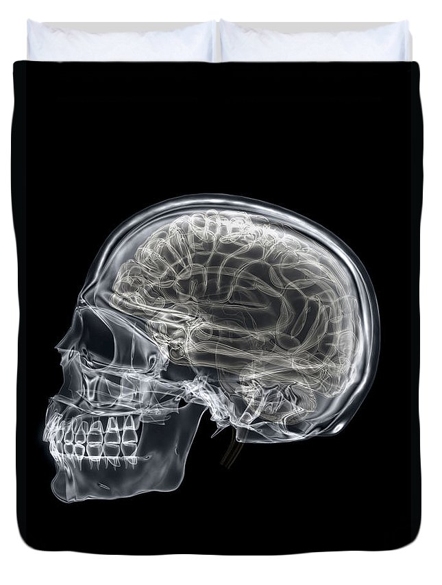 Frontal Lobe Duvet Cover featuring the photograph The Skull And Brain by Science Picture Co