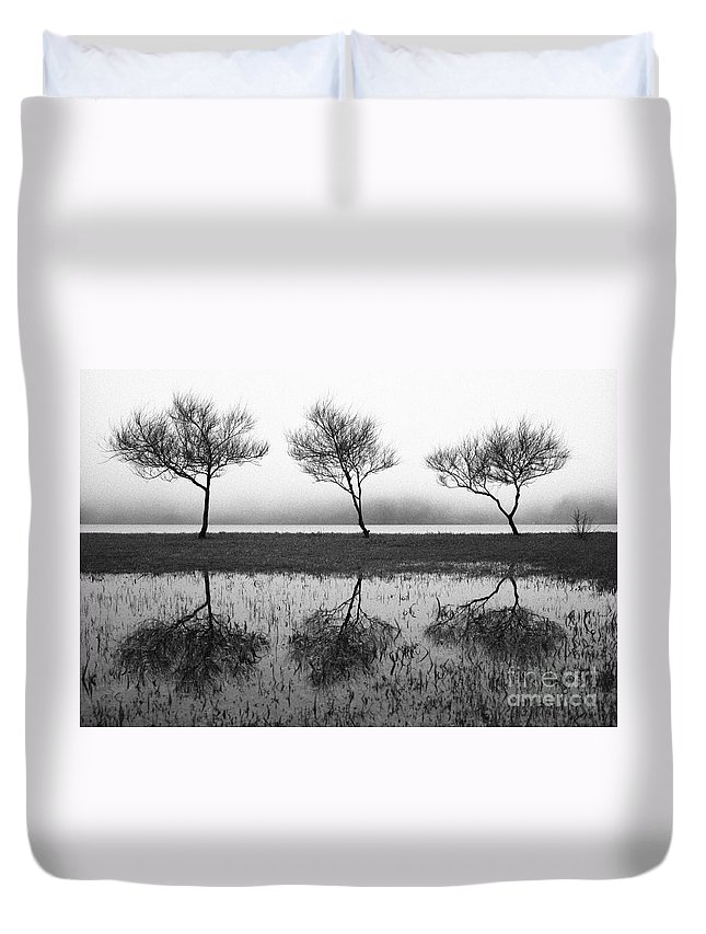Trees Duvet Cover featuring the photograph Three Trees by Gaspar Avila