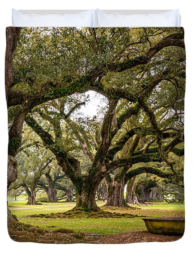 Oak Alley Plantation Duvet Cover featuring the photograph Time Travel by Steve Harrington