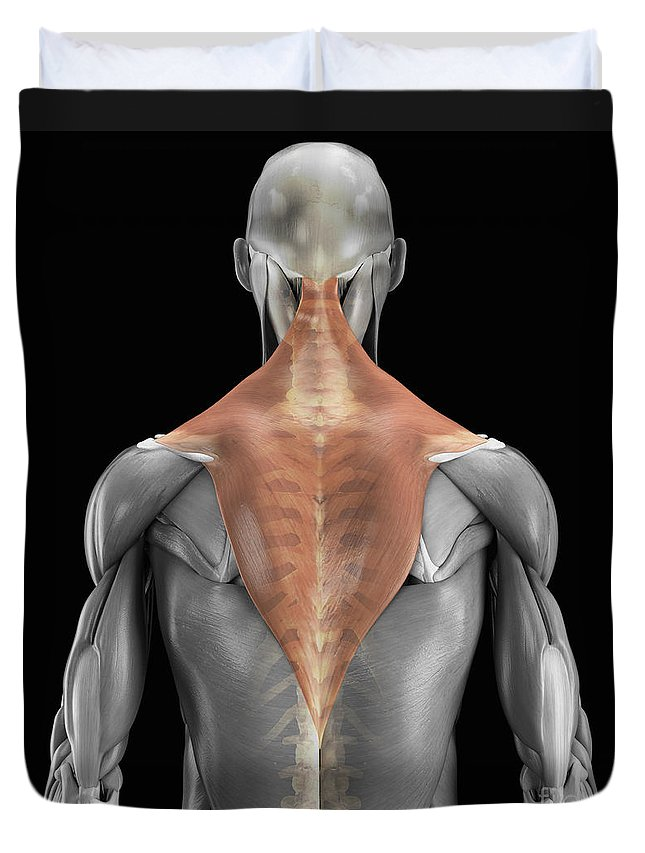 3d Visualisation Duvet Cover featuring the photograph Trapezius Muscle With Skeleton by Science Picture Co