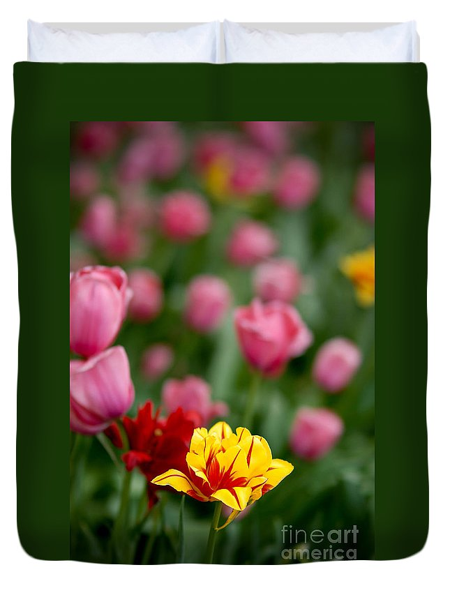 Vibrant Color Duvet Cover featuring the photograph Tulips by Amy Cicconi