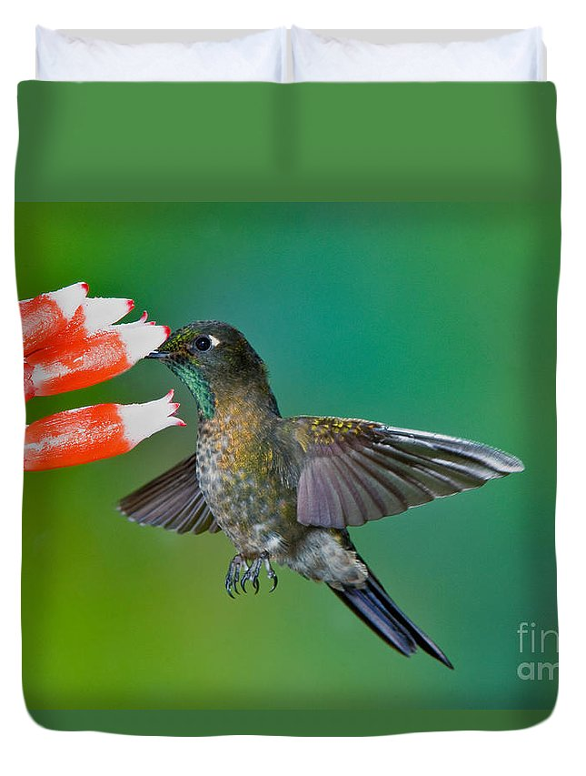 Animal Duvet Cover featuring the photograph Tyrian Metaltail by Anthony Mercieca