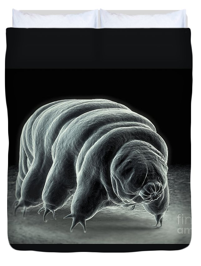 Extremophile Duvet Cover featuring the photograph Water Bear Tardigrades by Science Picture Co