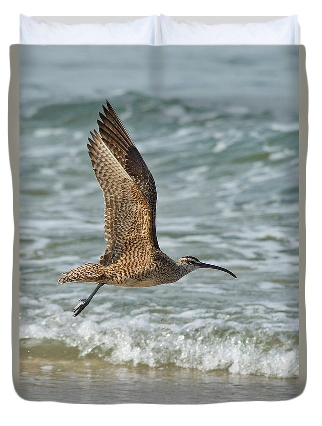 Fauna Duvet Cover featuring the photograph Whimbrel In Flight by Anthony Mercieca