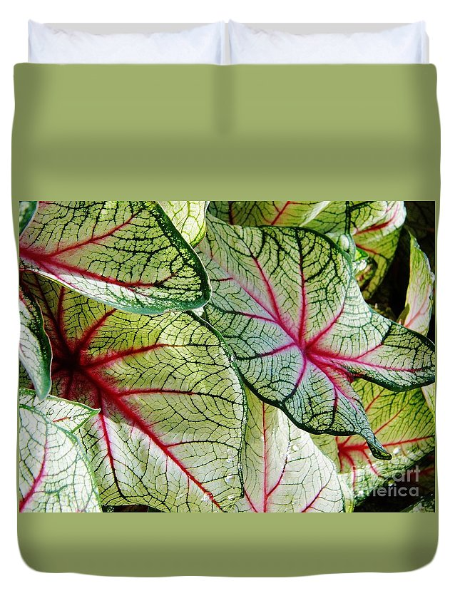 Colorful Duvet Cover featuring the photograph White And Pink by D Hackett