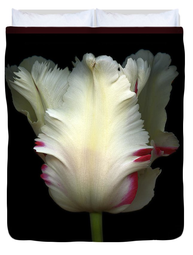 Color Duvet Cover featuring the photograph White And Red Tulip by Oscar Gutierrez