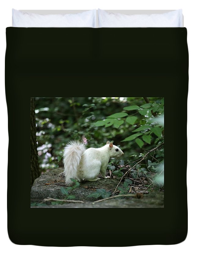 White Squirrel Duvet Cover featuring the photograph White Squirrel by Dwight Cook