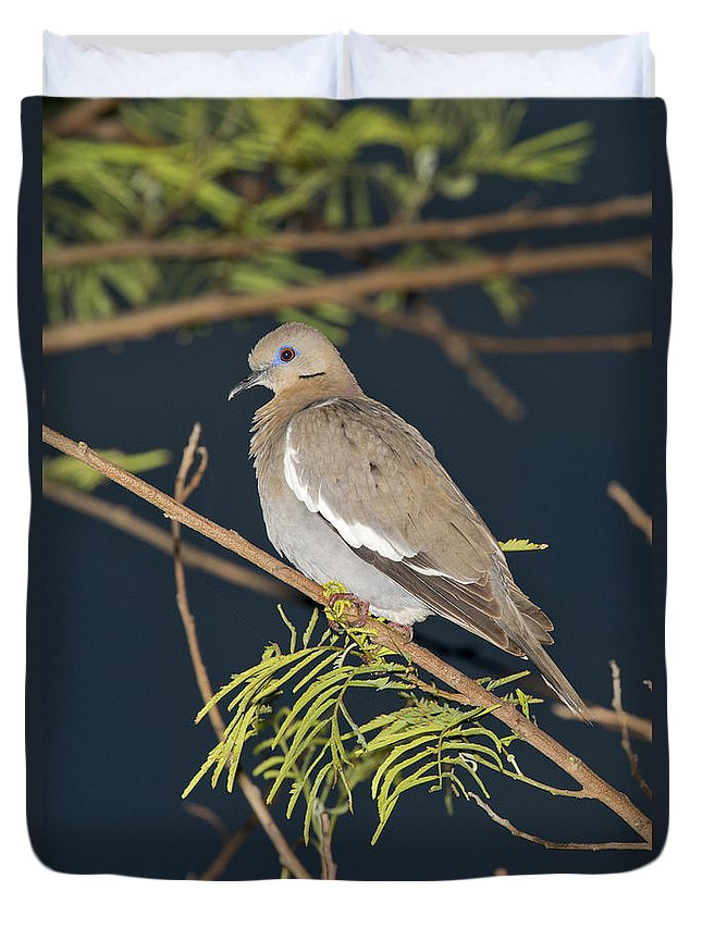 White-winged Dove Duvet Cover featuring the photograph White-winged Dove by Anthony Mercieca