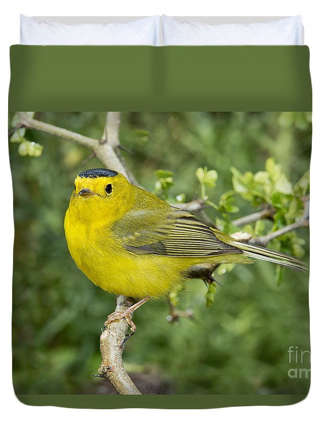 Wilson's Warbler Duvet Cover featuring the photograph Wilsons Warbler by Anthony Mercieca