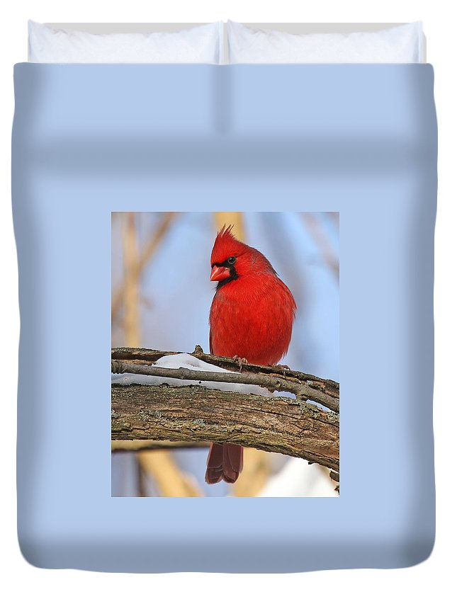 Birds Duvet Cover featuring the photograph Winter Cardinal by Mike Dickie