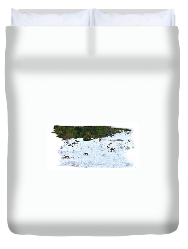 Winter Grazing Duvet Cover featuring the photograph Winter Grazing by Will Borden
