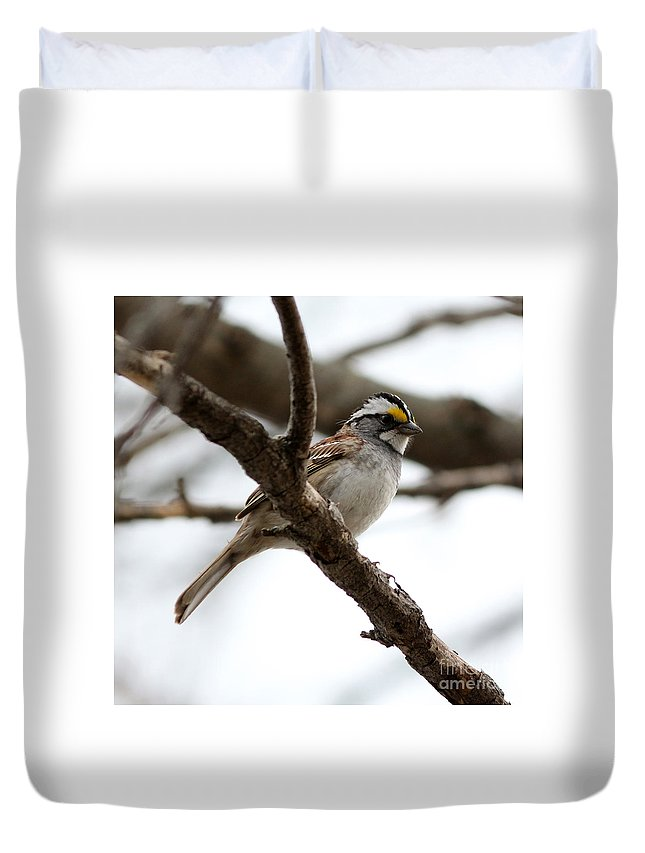 Yellow Crowned Sparrow Duvet Cover featuring the photograph Yellow Crowned Sparrow by Lori Tordsen