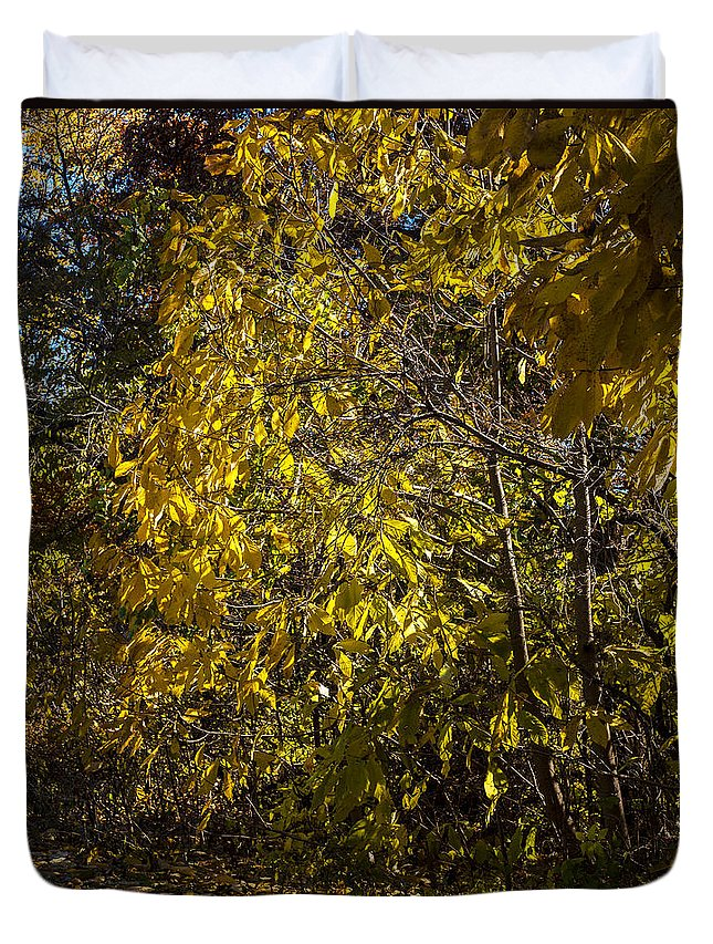 Fall Duvet Cover featuring the photograph Yellow Leaves by Edward Peterson