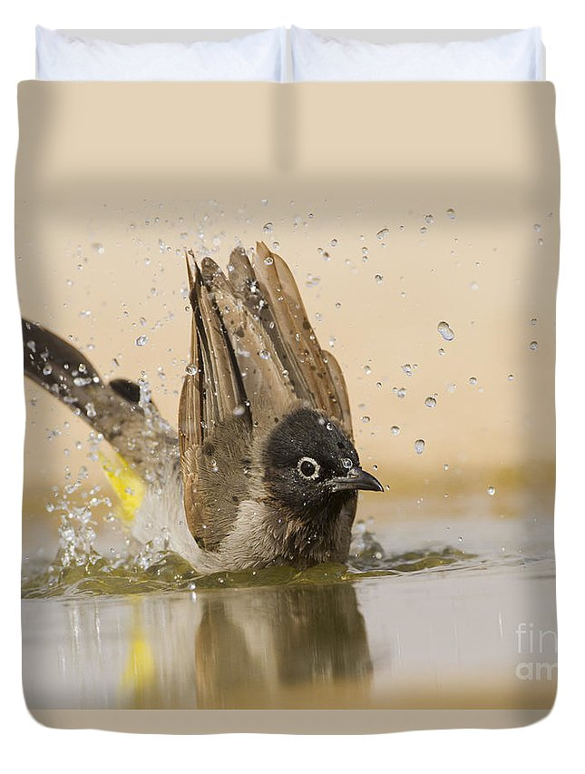 Ornithology Duvet Cover featuring the photograph Yellow-vented Bulbul by Eyal Bartov