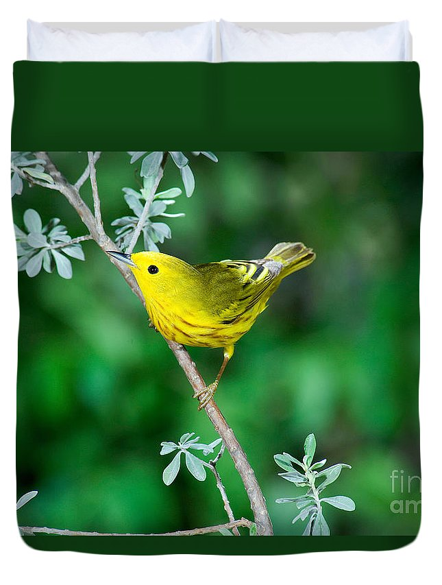 Fauna Duvet Cover featuring the photograph Yellow Warbler by Anthony Mercieca