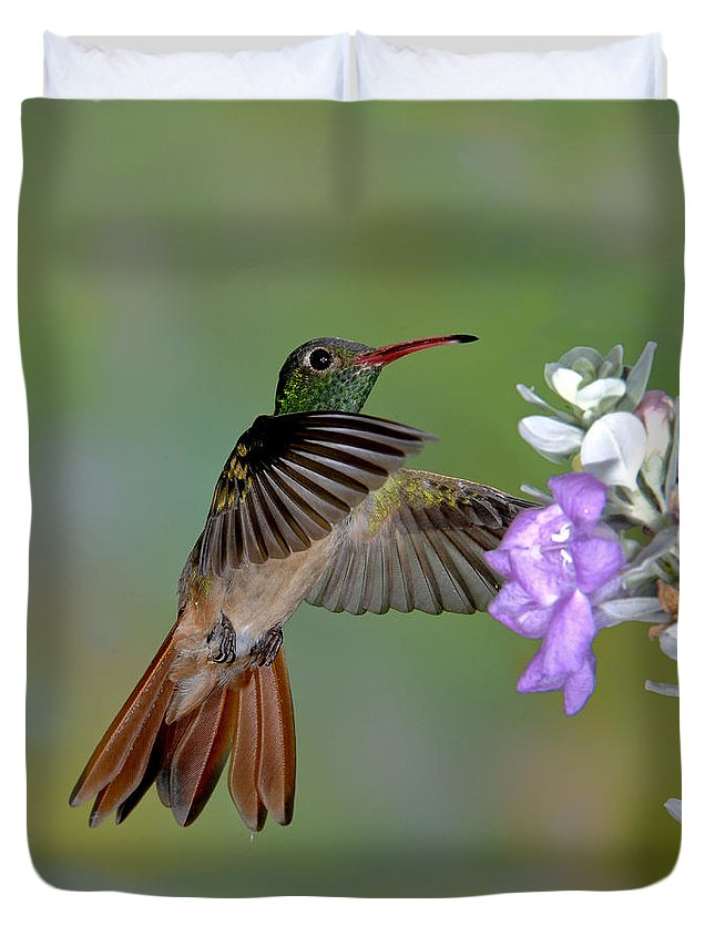 Amazilia Yacatanensis Duvet Cover featuring the photograph Buff-bellied Hummingbird by Anthony Mercieca