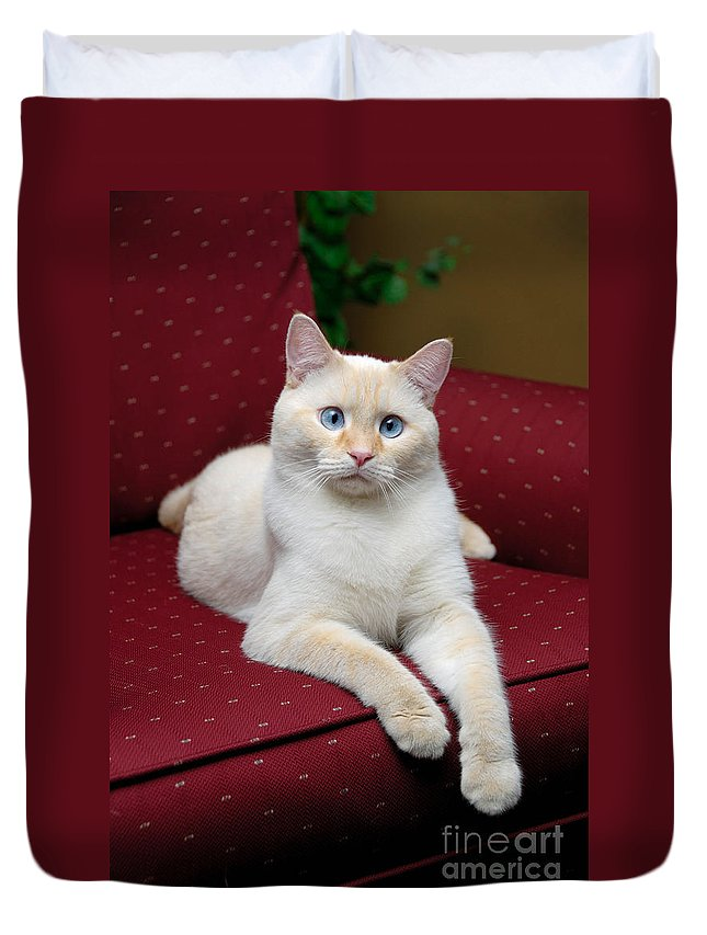 Flame Point Siamese Cat Duvet Cover For Sale By Amy Cicconi